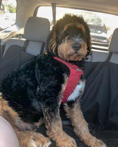 dog sling for car