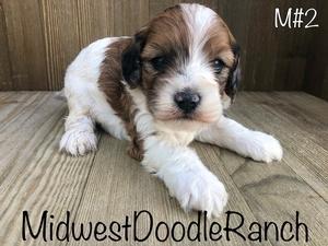 Midwest Doodle Ranch