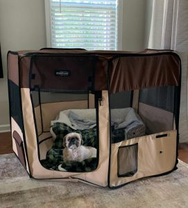 inside dog pen