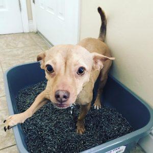 puppy litter pan