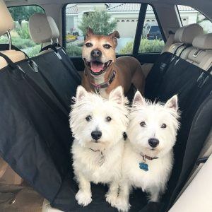 rear car seat hammock for dogs