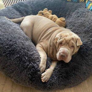 relaxing bed for dogs
