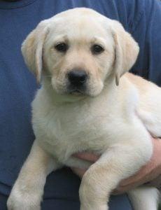 Barnes Puppy Love Kennels