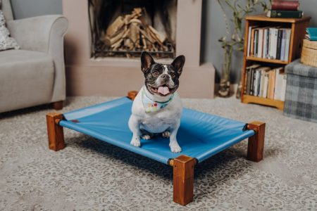 lifted dog bed with puppy