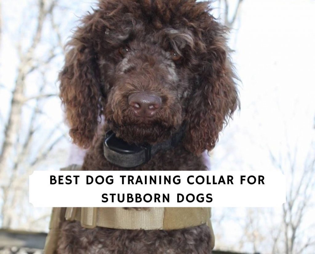 Best dog training Collar for Stubborn Dogs