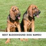 Bloodhound Dog Names