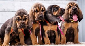 Bloodhound boy and girl names