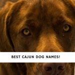 Cajun Dog Names