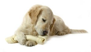 What are the benefits of rawhide and beefhide