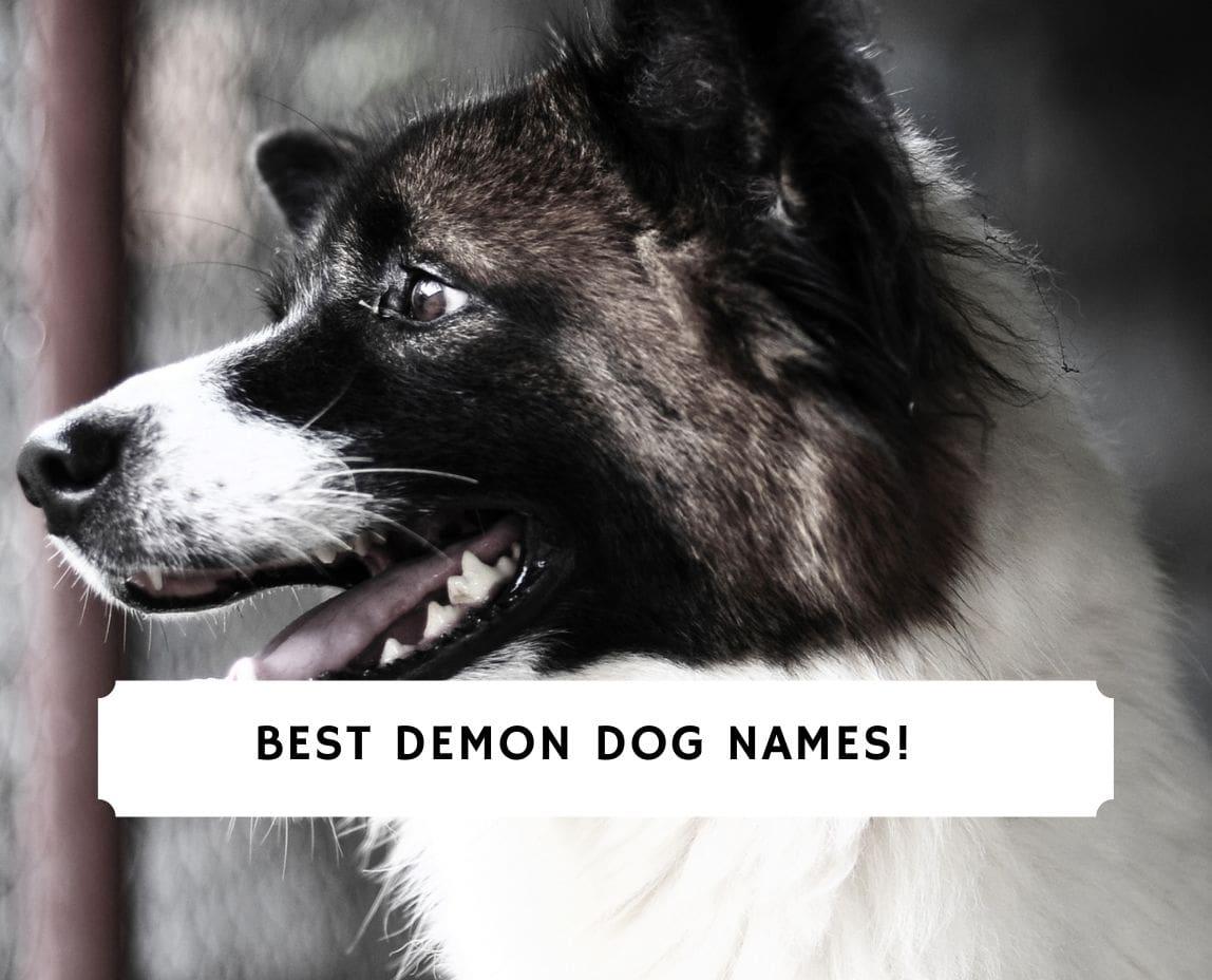 Demon Dog Names