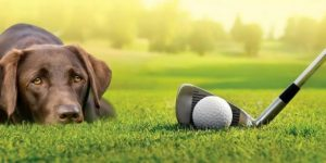 Dog Names Inspired by Famous Golfers