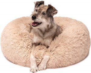 Friends Forever Dog Bed