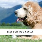 Golf Dog Names