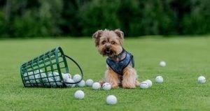 Golf Dog Nicknames
