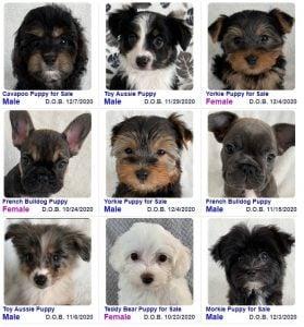 Heavenly Puppies