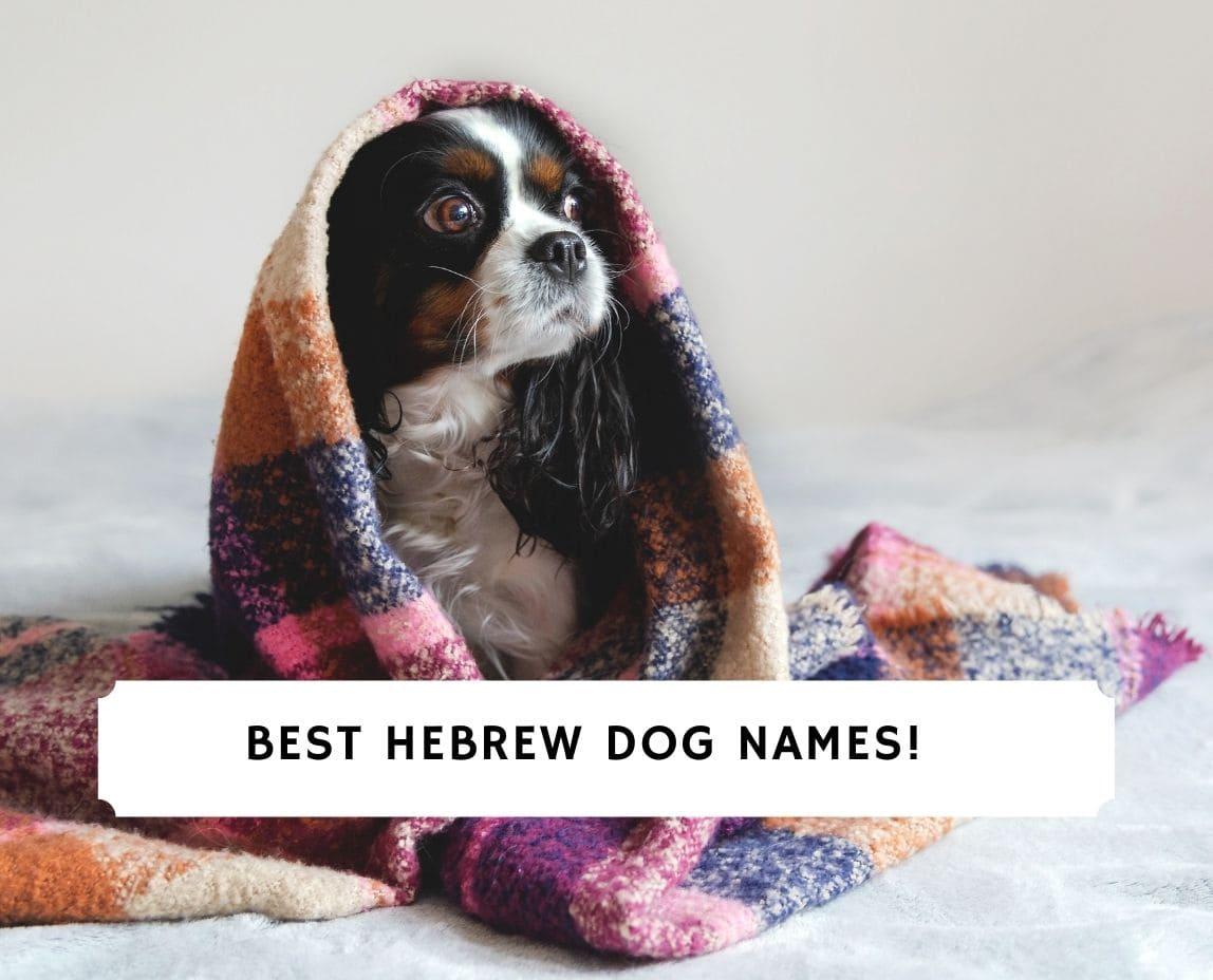 Hebrew Dog Names