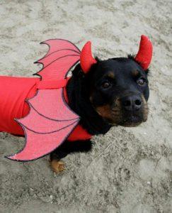 devil dog names