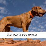 Manly Dog Names