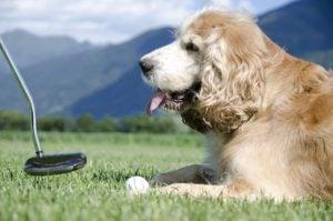 Names Inspired by Golf Slang