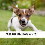 Punjabi Dog Names