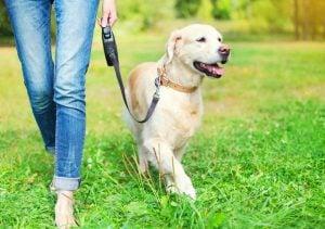 Punjabi Dog Names According To Personality