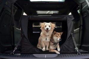 dog car names