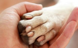 Is having webbed feet dangerous for my dog?