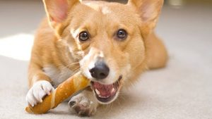 What are the risks associated with rawhide and beefhide treats