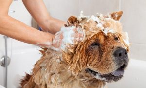 What kind of shampoo should I use for my dog