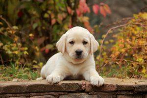 Sassy names for a dog