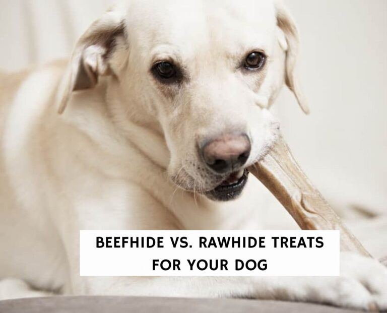 Beefhide vs. Rawhide Treats For Your Dog