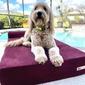 goldendoodle dog bed