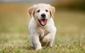 dog names that are sassy