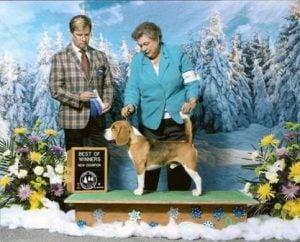 Riverrun Beagles & Dachshunds