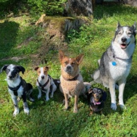 Be a Volunteer For Dog Shelters
