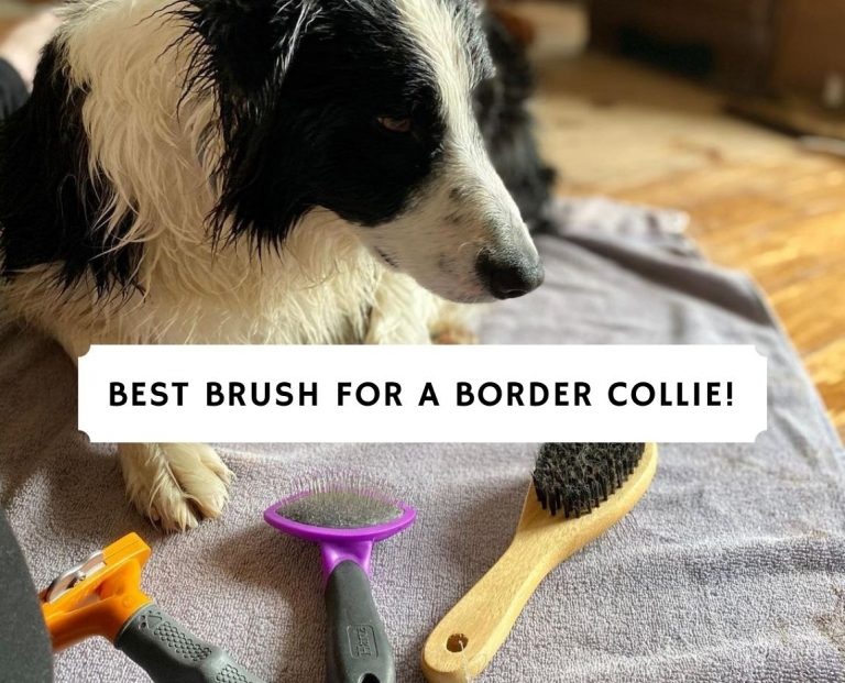 Best Brush for a Border collie