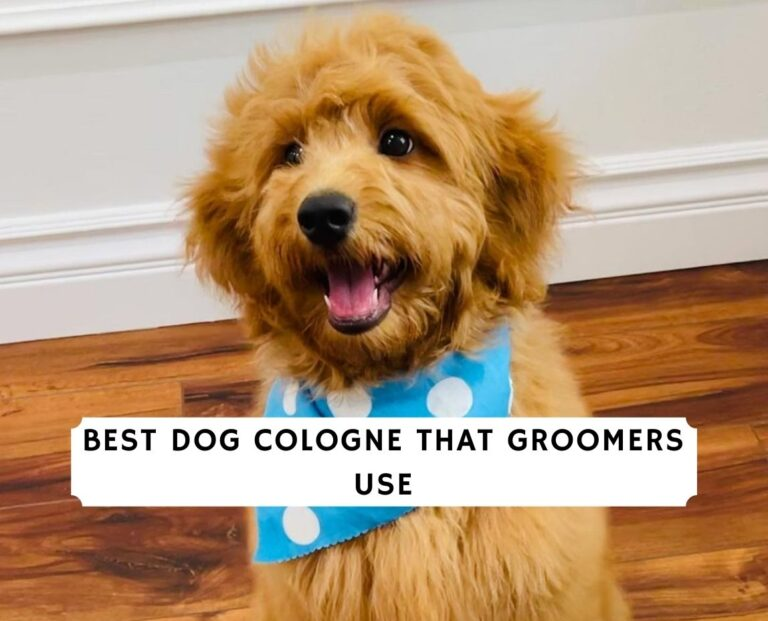 Best Dog Cologne that Groomers Use