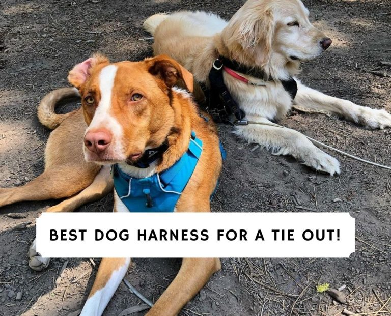 Best Dog Harness for a Tie out