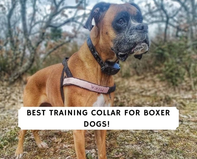 Best Training Collar for Boxer Dogs
