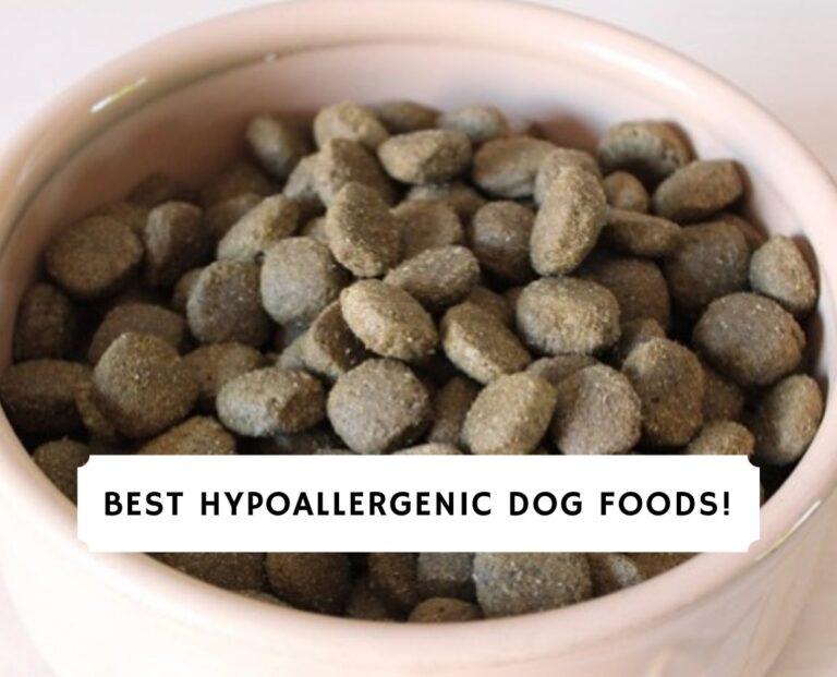 Best hypoallergenic dog foods!