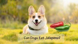 Can Dogs Eat Jalapeños
