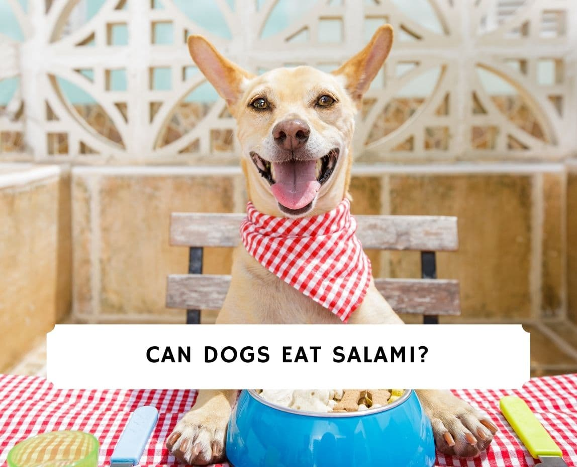 Can Dogs Eat Salami
