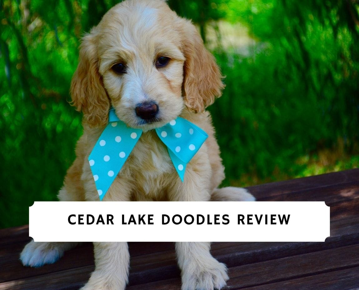 Cedar Lake Doodles