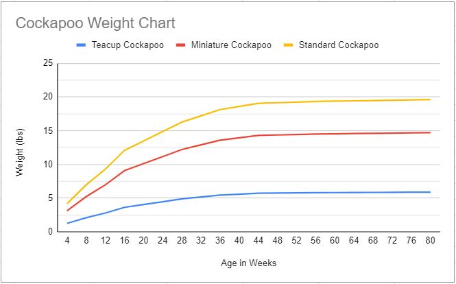 Cockapoo growth chart