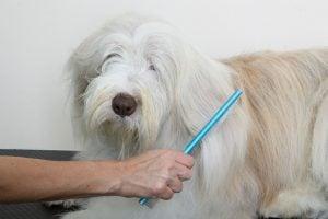 Colette's Pet Salon & Paw Spa