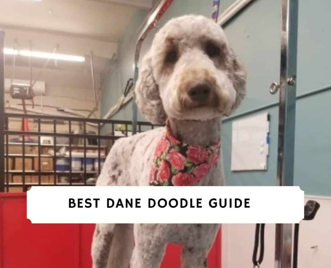 Dane Doodle