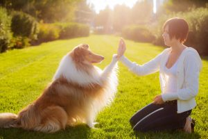 Conclusion For How To Get Your Dog To Respect You