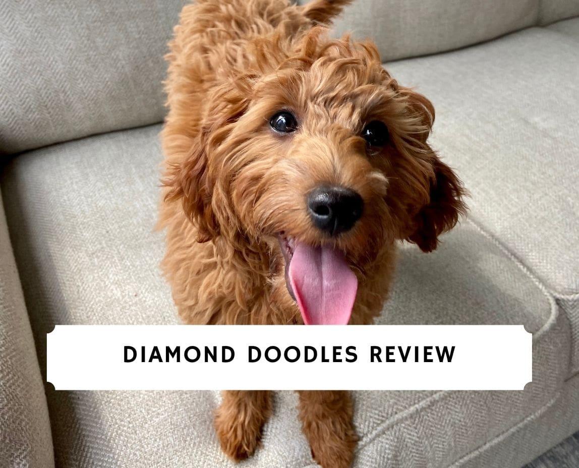 Diamond Doodles Review