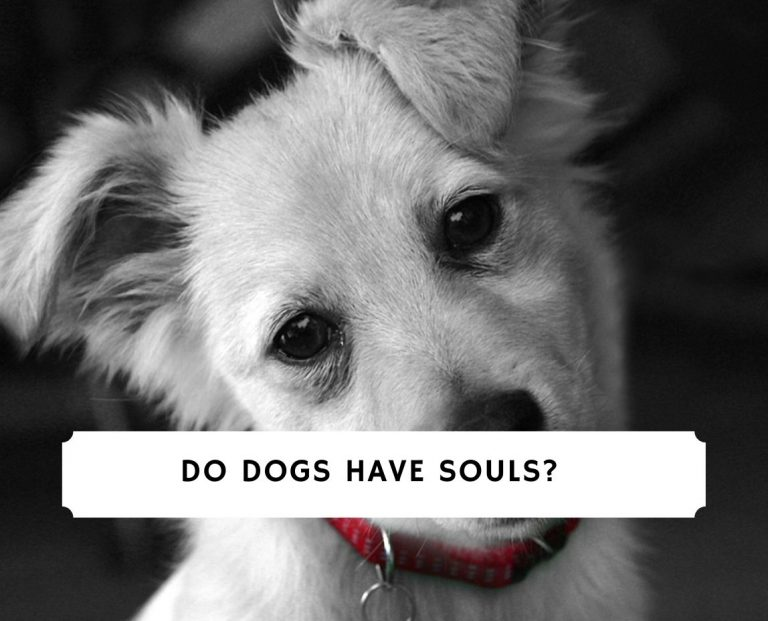 Do Dogs Have Souls