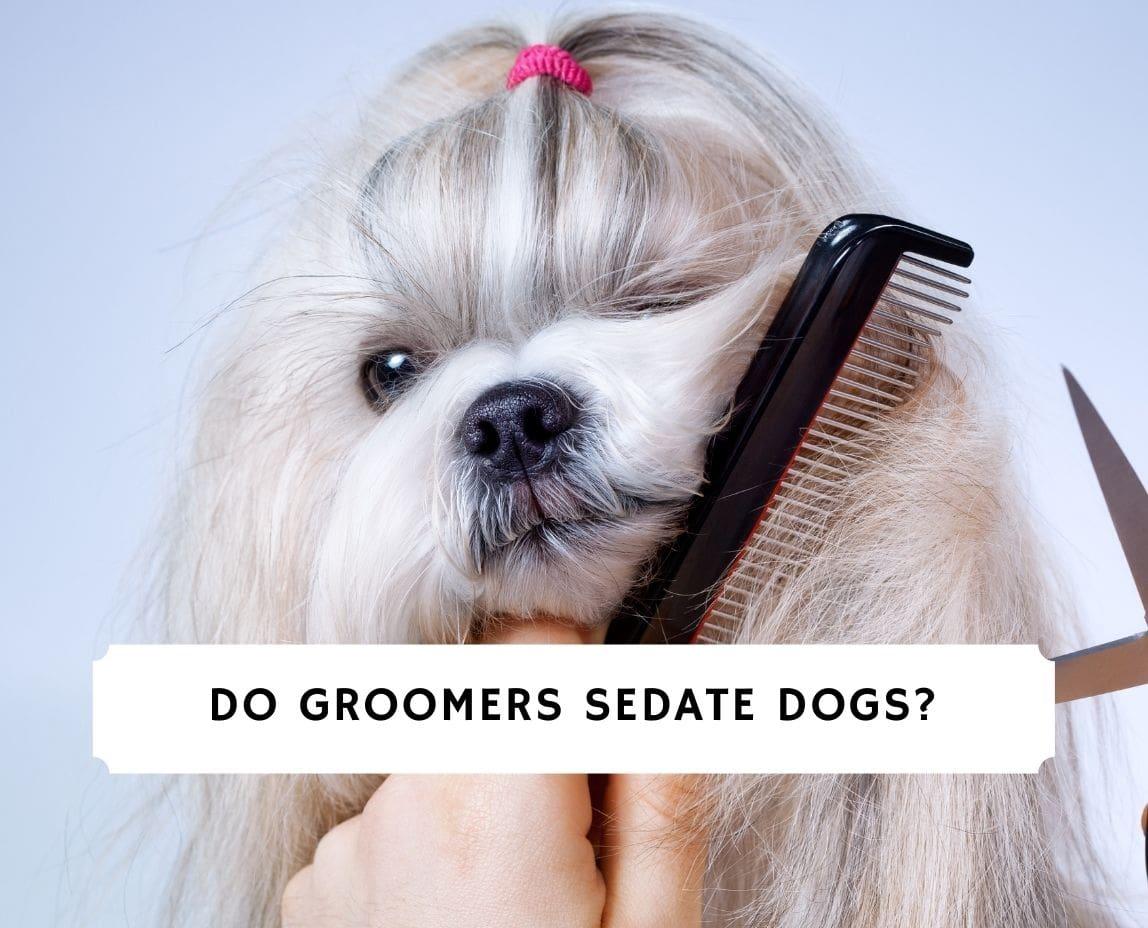 Do Groomers Sedate Dogs